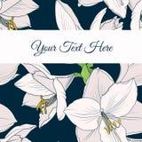 Bloemen de kaartmalplaatje van de Hippeastrumamaryllis lilly stock illustratie