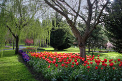Bloemen in de lente Royalty-vrije Stock Afbeeldingen