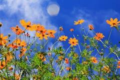 Bloemen in de lente Stock Afbeelding
