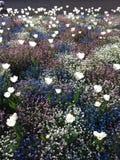 Bloemen in de lente Stock Fotografie
