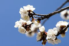 Bloemen in de lente royalty-vrije stock foto's
