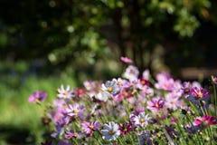 Bloemen in de lente bij de tuin royalty-vrije stock foto's