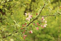 Bloemen in de lente royalty-vrije stock afbeelding