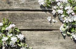 Bloemen de lenteachtergrond Royalty-vrije Stock Afbeelding