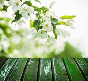 Bloemen de Lenteachtergrond met Bloemen, Groene Bladeren stock foto's