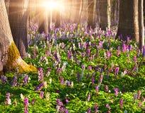 bloemen in de lentebos Royalty-vrije Stock Afbeelding