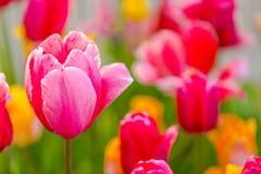 Bloemen - de Lentedag in botanische tuin Royalty-vrije Stock Fotografie