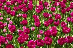 Bloemen in de lentepark Bloemlandschap Stock Foto's