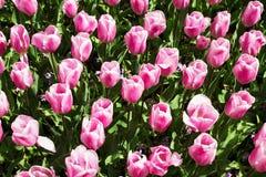 Bloemen in de lentepark Bloemlandschap Stock Foto