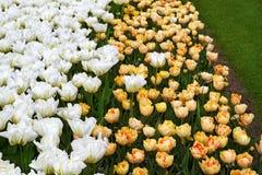 Bloemen in de lentepark Bloemlandschap Stock Fotografie