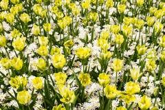 Bloemen in de lentepark Bloemlandschap Stock Afbeeldingen