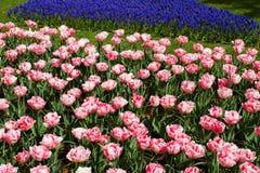 Bloemen in de lentepark Bloemlandschap Royalty-vrije Stock Fotografie
