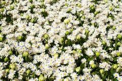 Bloemen in de lentepark Bloemlandschap Royalty-vrije Stock Afbeelding