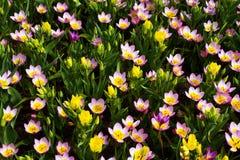Bloemen in de lentepark Bloemlandschap Royalty-vrije Stock Afbeeldingen