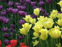 Bloemen De lentetulpen Royalty-vrije Stock Afbeeldingen
