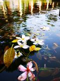 Bloemen in de pool op het water royalty-vrije stock afbeelding