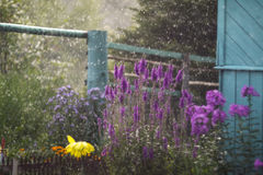 Bloemen in de Regen Stock Afbeeldingen