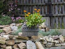 Bloemen in de Rieten Mand Royalty-vrije Stock Afbeelding