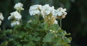 Bloemen in de serre stock video