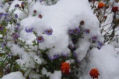 Bloemen in de sneeuw Stock Afbeeldingen