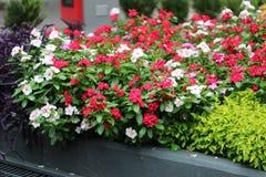 Bloemen in de stad royalty-vrije stock fotografie