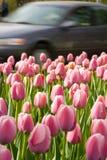 Bloemen in de stad Stock Afbeelding