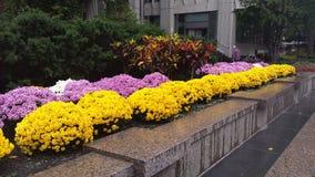 Bloemen in de stad royalty-vrije stock foto