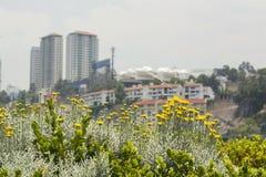 Bloemen in de stad Stock Foto