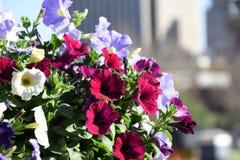 Bloemen in de Stadscentrum van Pretoria Stock Afbeelding