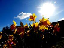Bloemen in de stralen van de zon Stock Foto