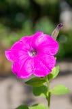 Bloemen in de tuin Stock Fotografie