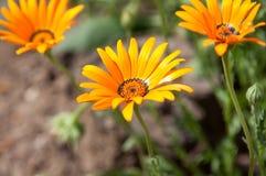 Bloemen in de tuin Royalty-vrije Stock Foto's