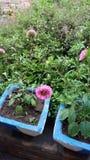 Bloemen in de tuin Royalty-vrije Stock Fotografie
