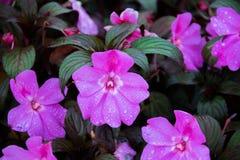 Bloemen in de tuin Stock Foto
