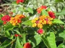 Bloemen in de tuin Stock Foto's