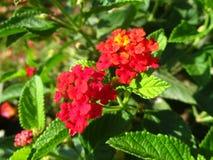Bloemen in de tuin Royalty-vrije Stock Afbeelding