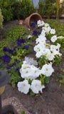 Bloemen in de tuin Stock Afbeelding