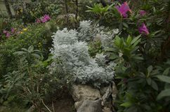 Bloemen in de tuin stock afbeeldingen