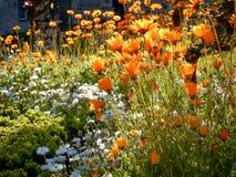 Bloemen in de Tuin van Santa Barbara stock afbeeldingen