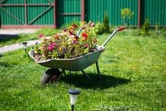 Bloemen in de tuinkruiwagen stock afbeeldingen