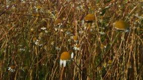 Bloemen in de weide die zich in de wind bewegen stock videobeelden
