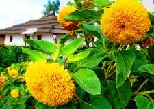 Bloemen in de werf van een huis in de Oekraïne royalty-vrije stock afbeeldingen