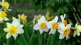 Bloemen in de wind stock video