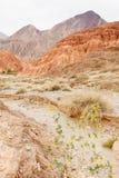 Bloemen in de woestijn Royalty-vrije Stock Afbeelding