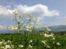 Bloemen in de zomer Stock Afbeeldingen