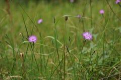 Bloemen in de zomer stock foto's