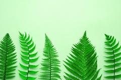 Bloemen de Zomermanier Fern Tropical Leaf minimaal stock foto's