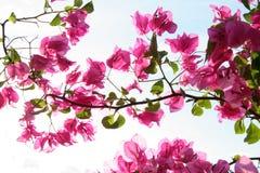 Bloemen in de zon Stock Foto