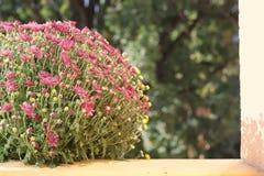 Bloemen in de zon royalty-vrije stock foto