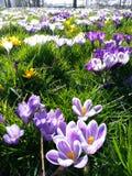 Bloemen in de zon Stock Foto's